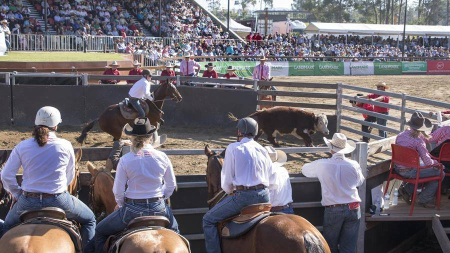 Grab your tickets to the World Championship Gold Buckle Campdraft at Willinga Park now.